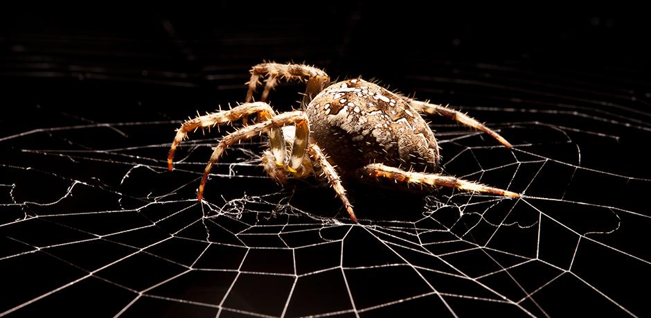 spider-in-the-garden